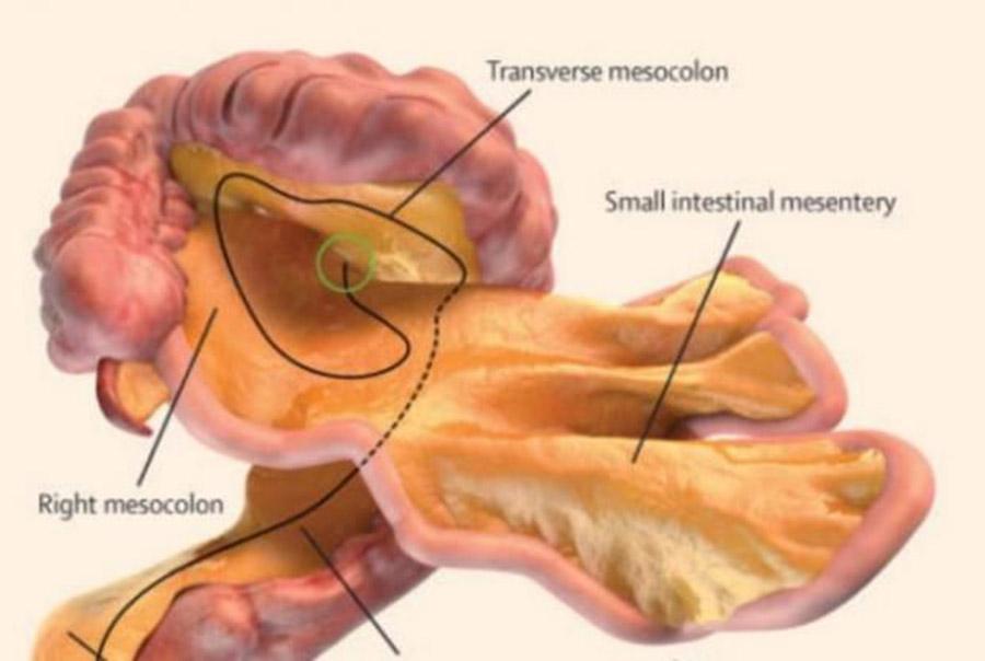 Científicos descubren que el cuerpo humano tiene un nuevo órgano ...
